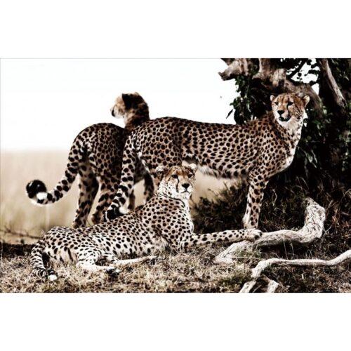 Glas schilderij 'Cheetah clan'