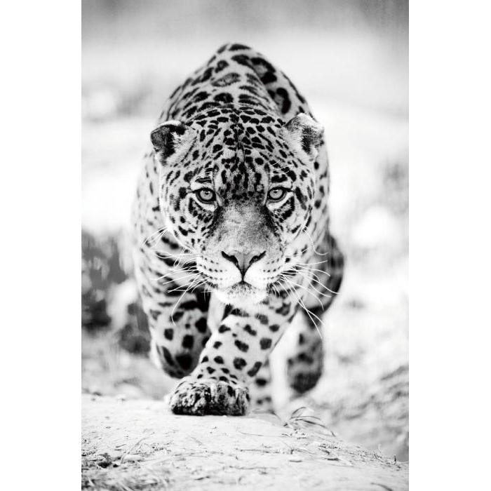 Foto op glas 'Leopard'